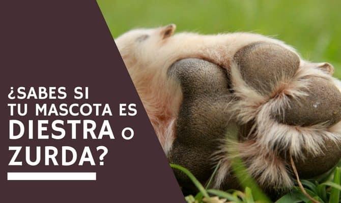 ¿Sabes si tu mascota es diestra o zurda?